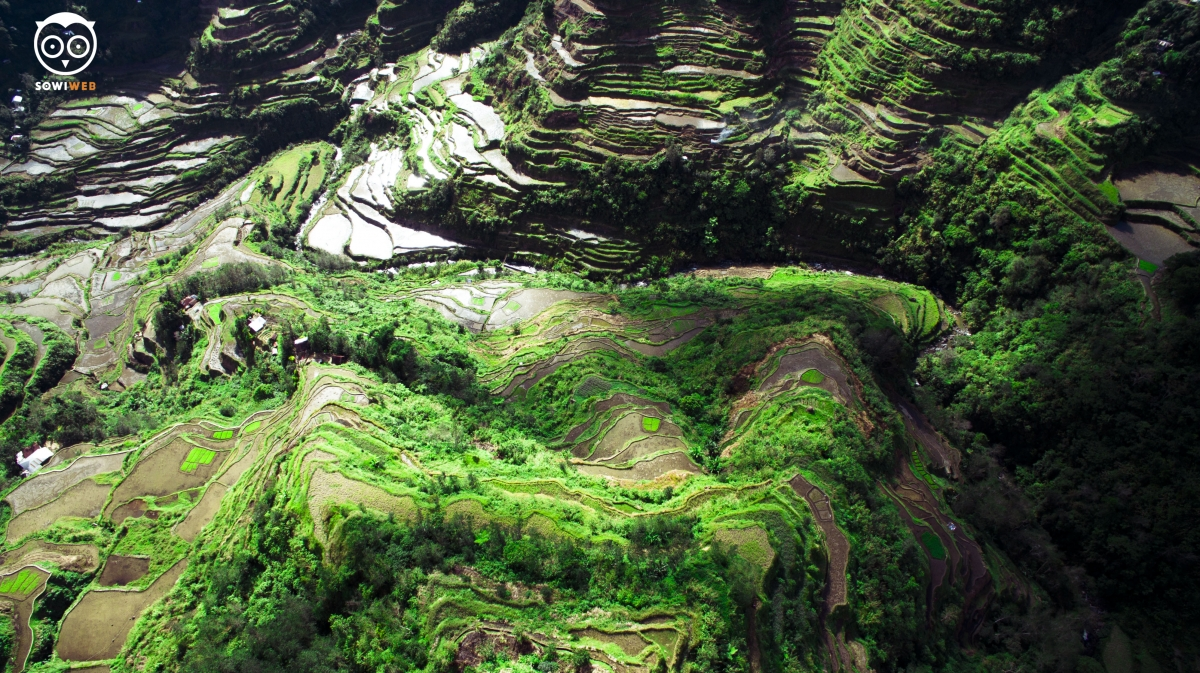 Banaue Rice Terraces Sowiweb